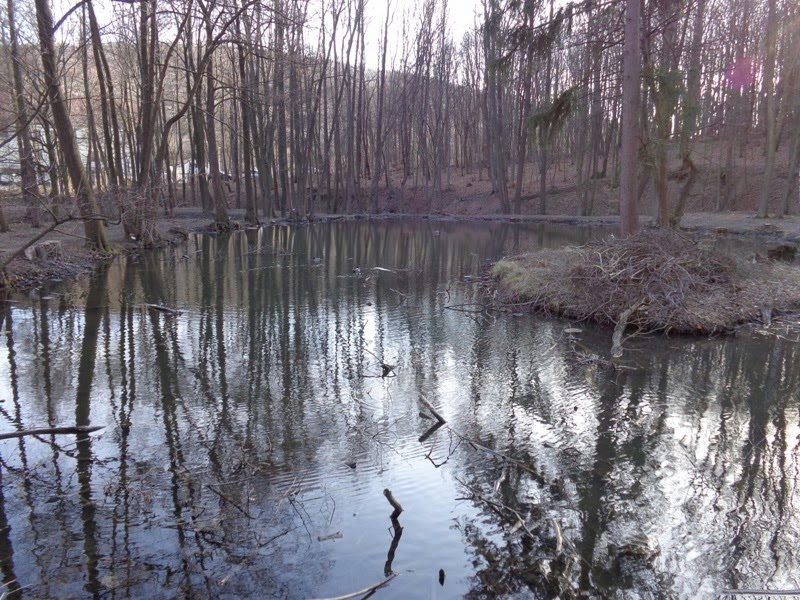 Teich im Schwarzenbergpark