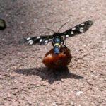 Schmetterling im Kreuttal