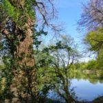 Donauauen bei Hainburg